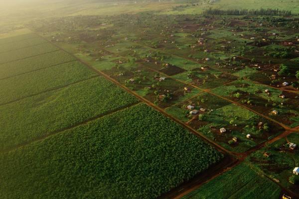 Plantations agricoles au Mozambique source: grain.org